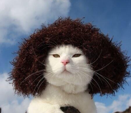 画像チャット猫